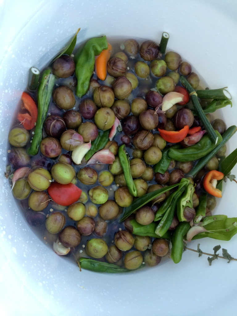 Home Cured Olives