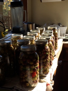 Homemade Olives on the Countertop